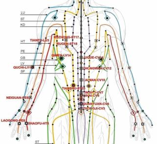The meridians used in acupuncture