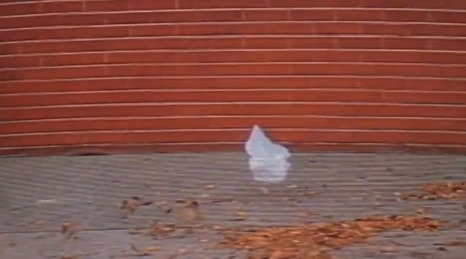 plastic bag american beauty